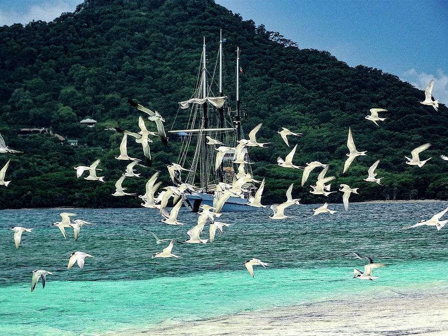 Seagulls and Vela at Sandy Island by Dan Podsobinski