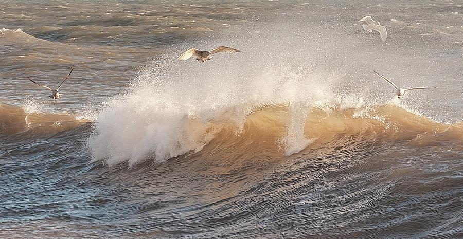 Seagulls Photograph - Seagulls enjoying the surf by A J Paul