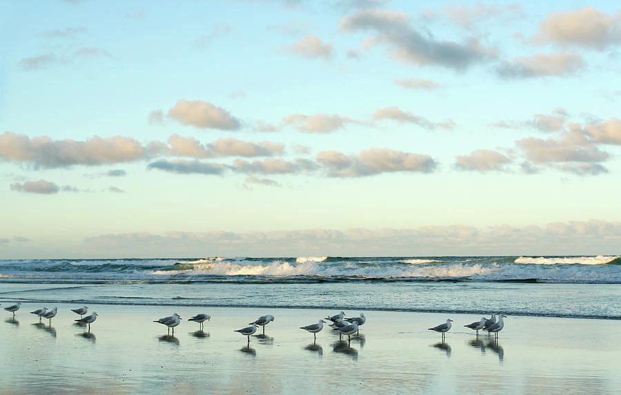 Seagulls In Heaven V2 Photograph by Breecedownunder