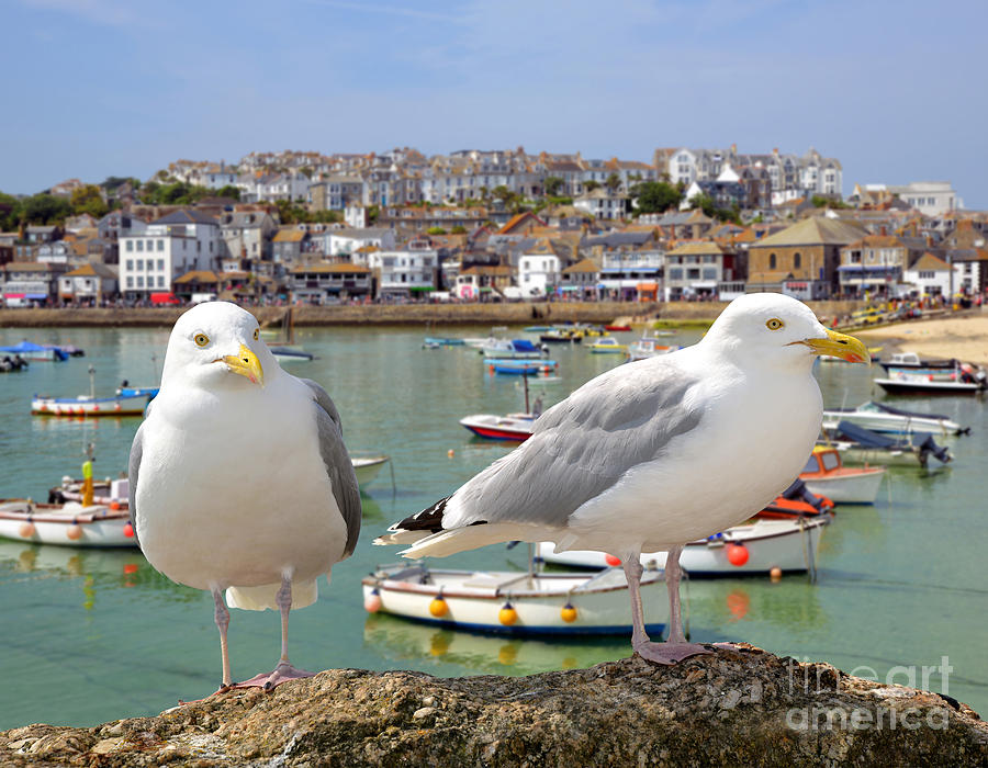 Big Photograph - Seagulls In St Ives Harbour Cornwall by Jaroslava V