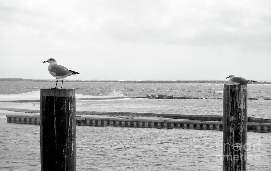 Seagulls Photograph - Seagulls by Megan Cohen