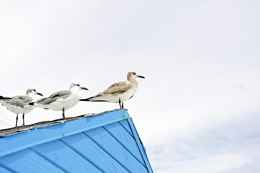 Seagulls On Roof Of Kiosk Photograph by Axel Schmies