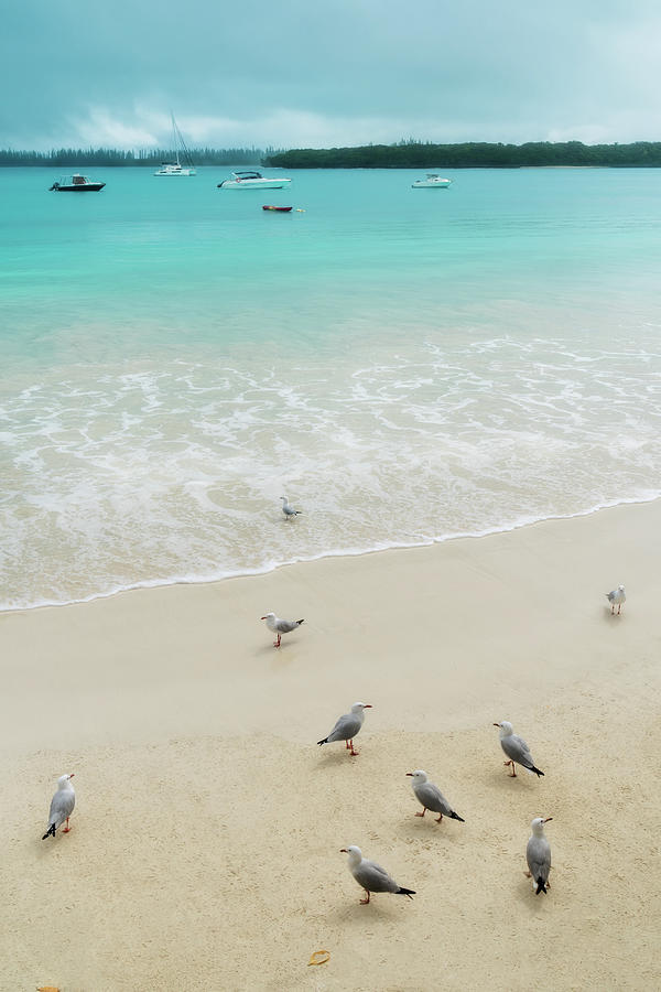 Seagulls on the beach at Kuto Bay by Daniela Constantinescu