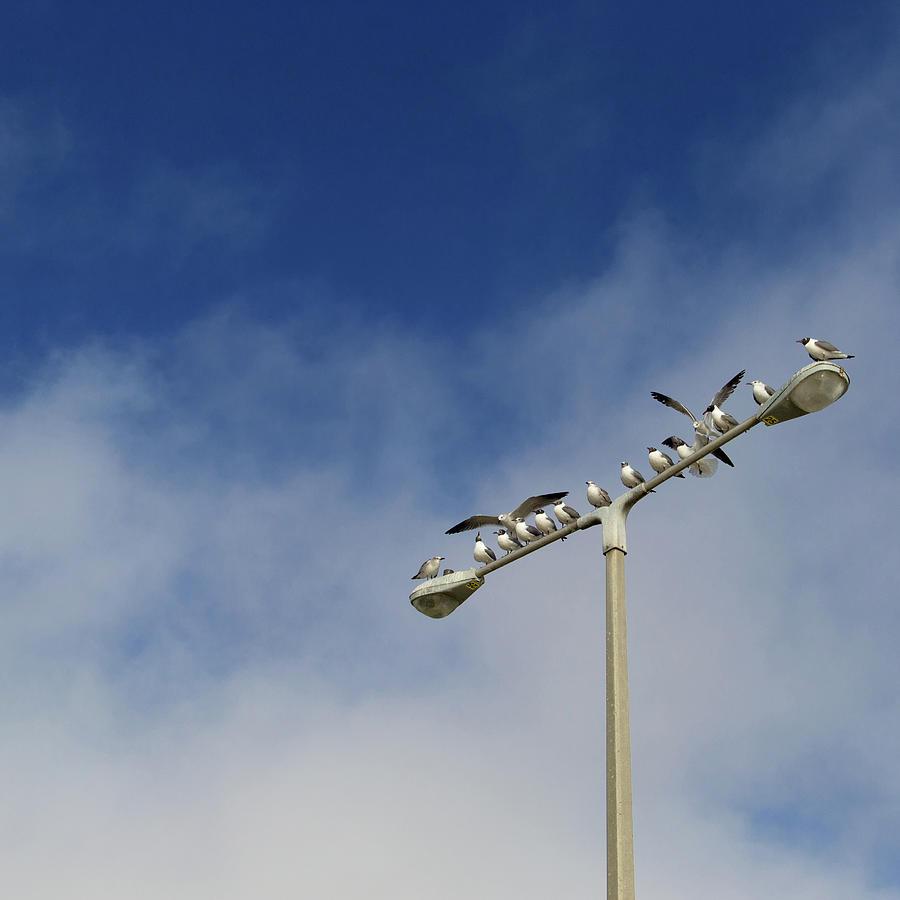 Seagulls Perching Photograph by Carol Wood
