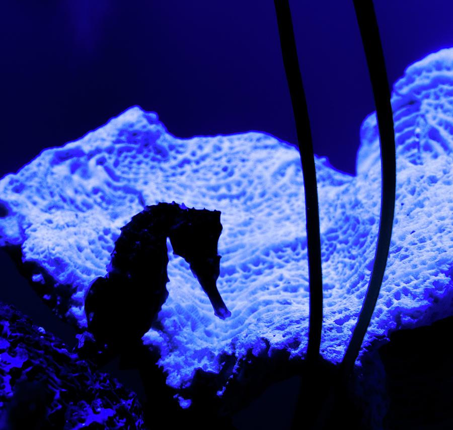 Seahorse Silhouette by Margaret Zabor
