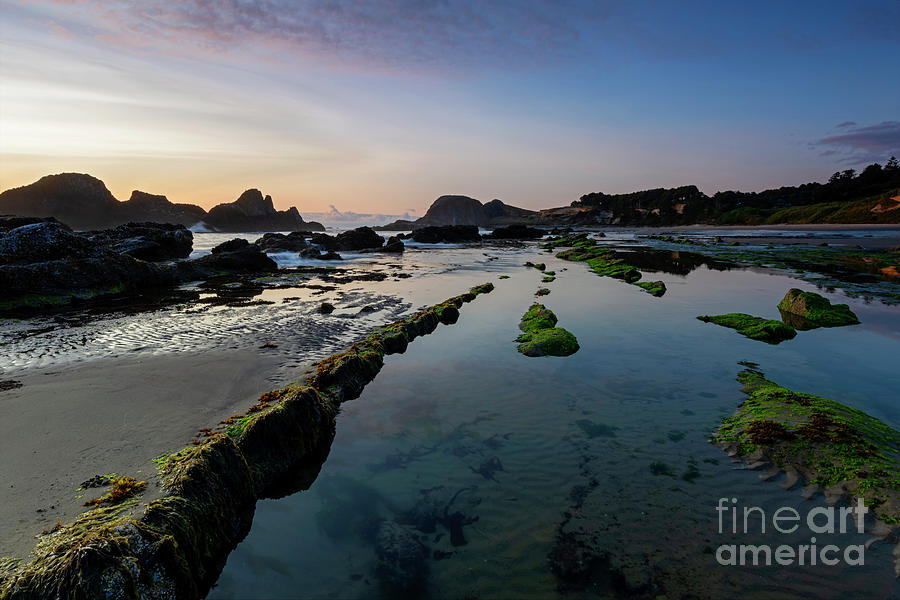 Seal Rock Tide Pools by Mike Dawson