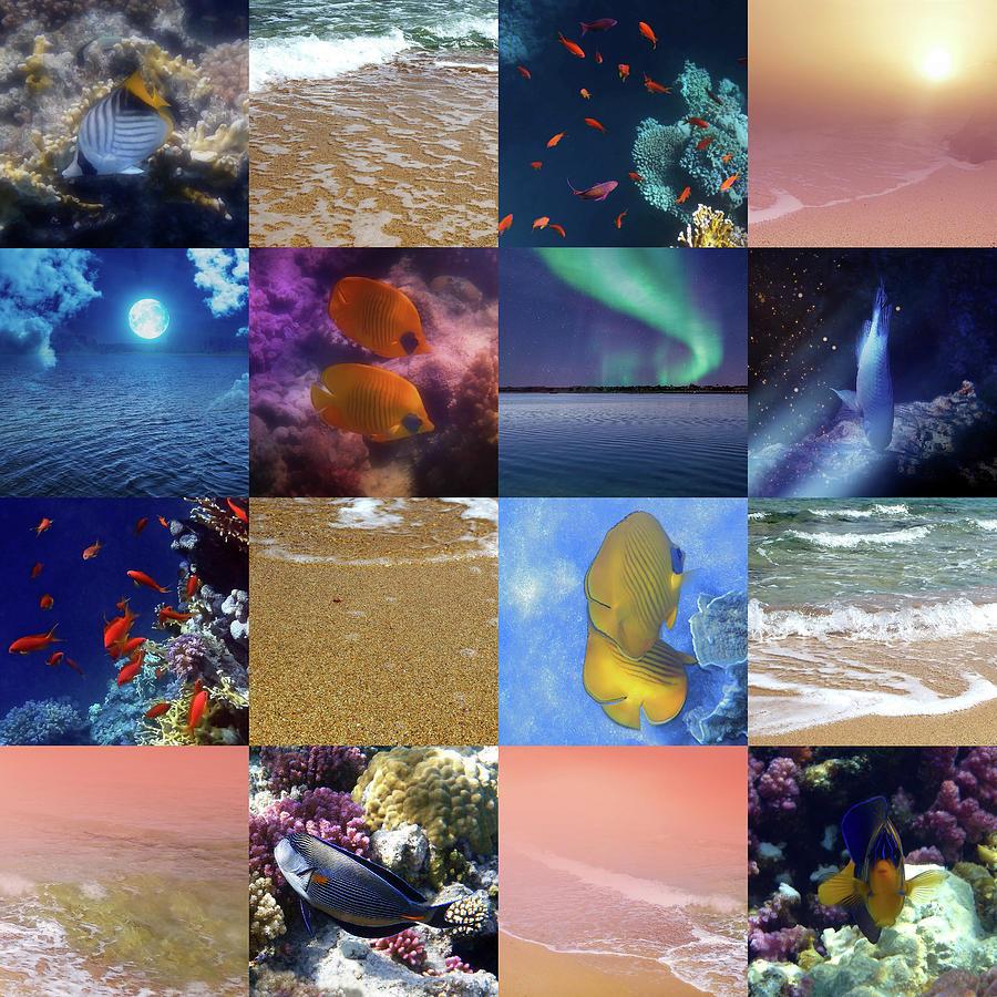 Sealife And SeaShore Collage by Johanna Hurmerinta