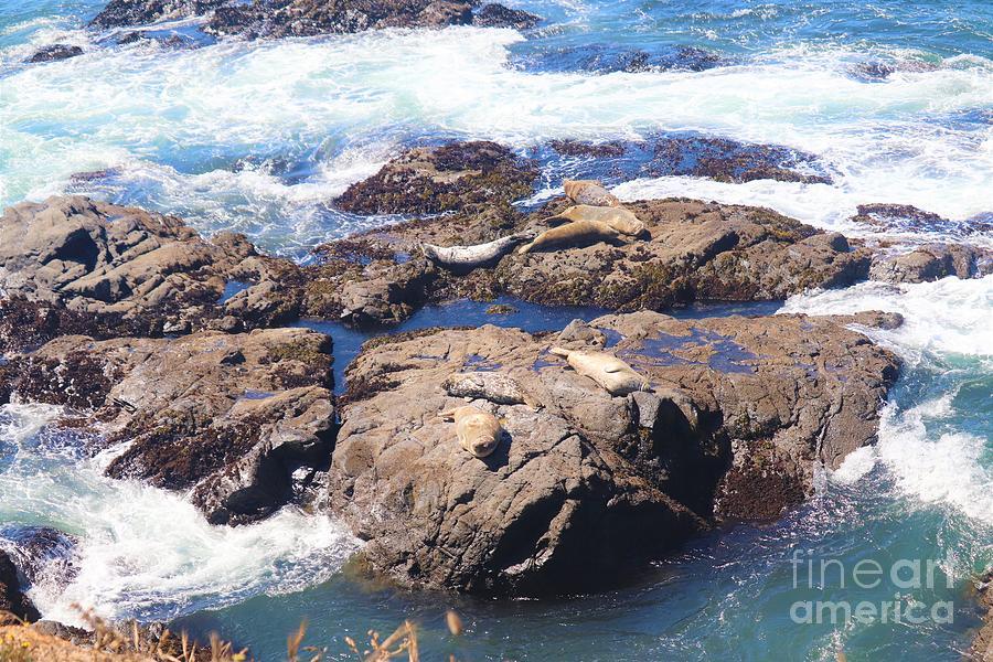 Seals Chillin by Cynthia Mask