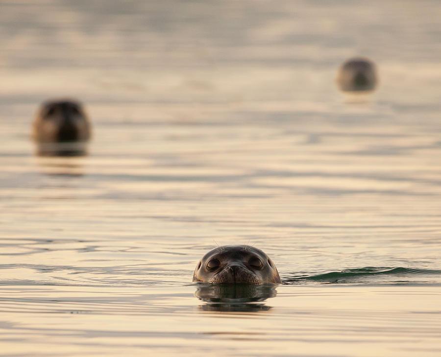Seals Photograph by Martin Zalba