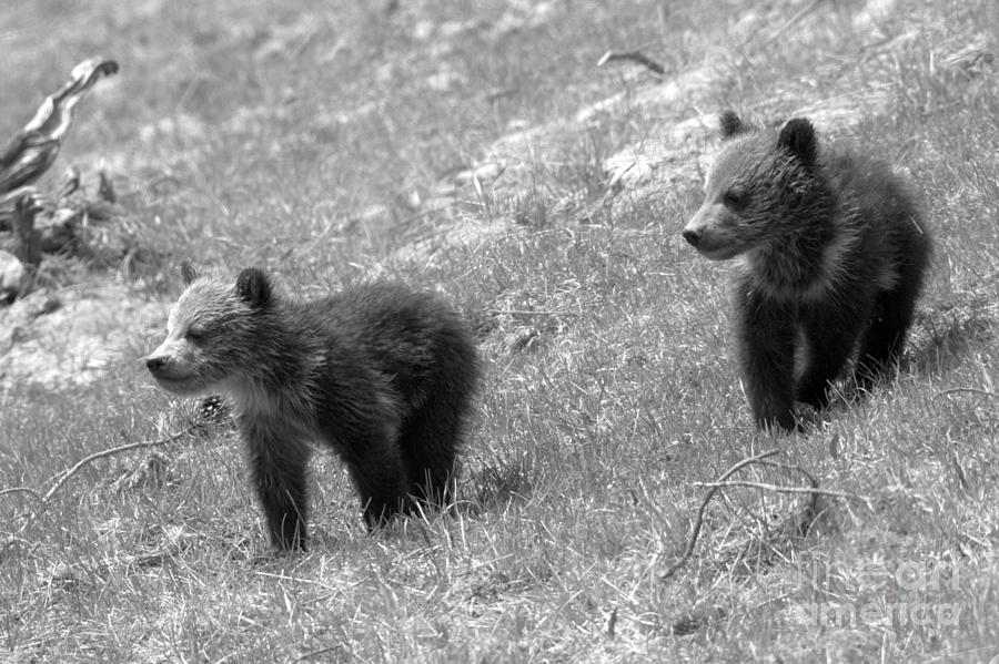 Searching For The Other Triplet Black And White by Adam Jewell
