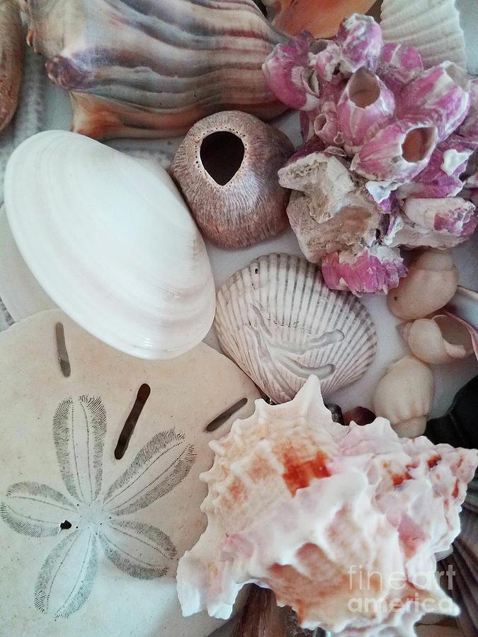 Seashell Assortment II Photograph