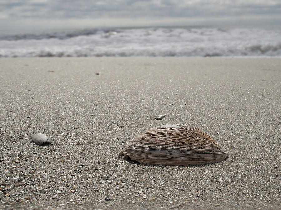 Beach Photograph - Seashell by David Palmer