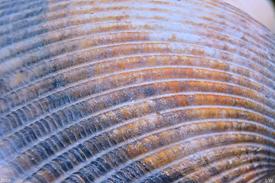 Seashell Ripples by Lisa Wooten
