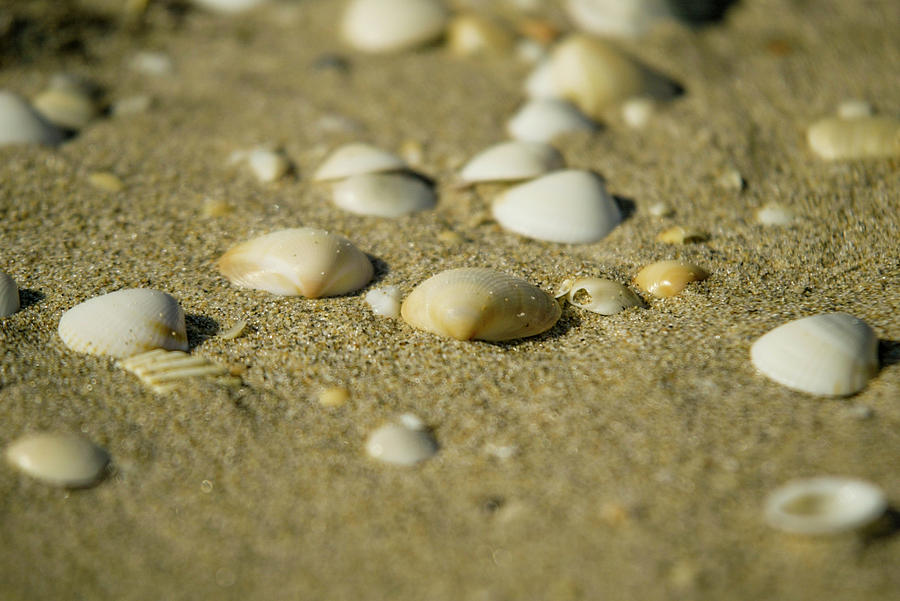 Seashell sands by Jason Hughes
