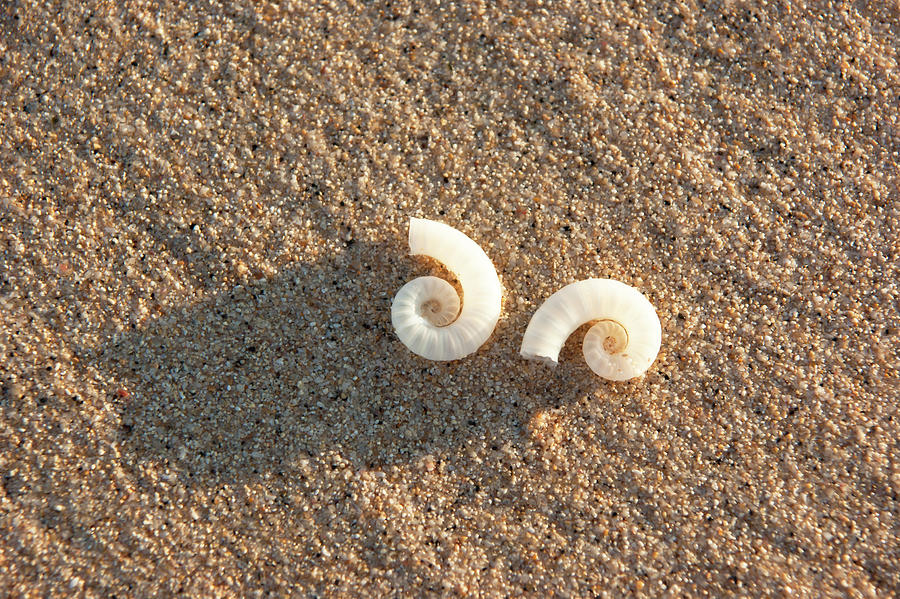 Seashells by Anna Kluba