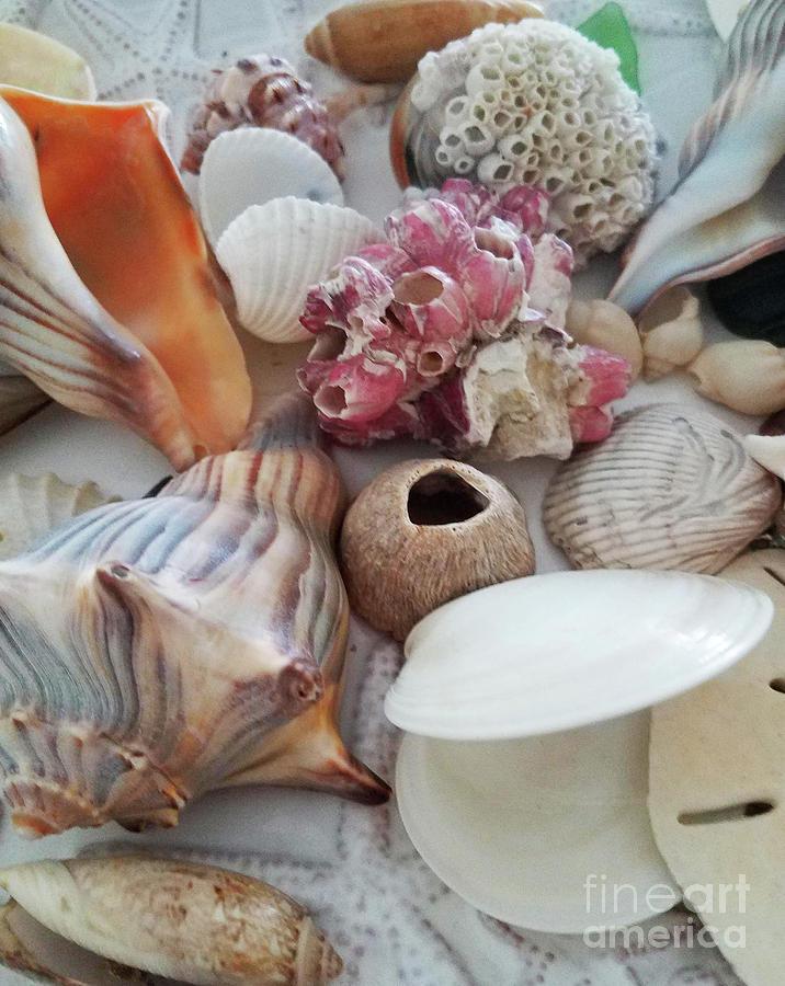 Seashells Assortment 1 Photograph
