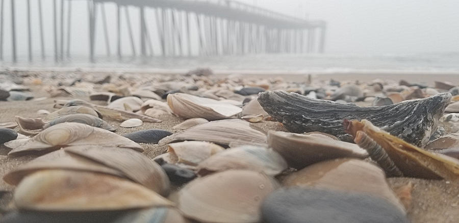 Seashells at the Pier by Robert Banach