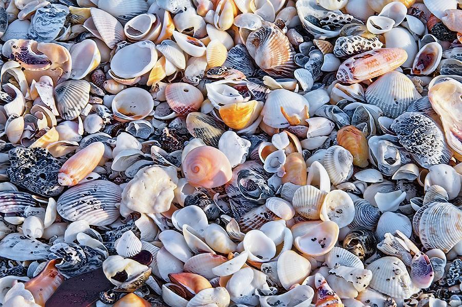 Seashells No 1 by Steve DaPonte