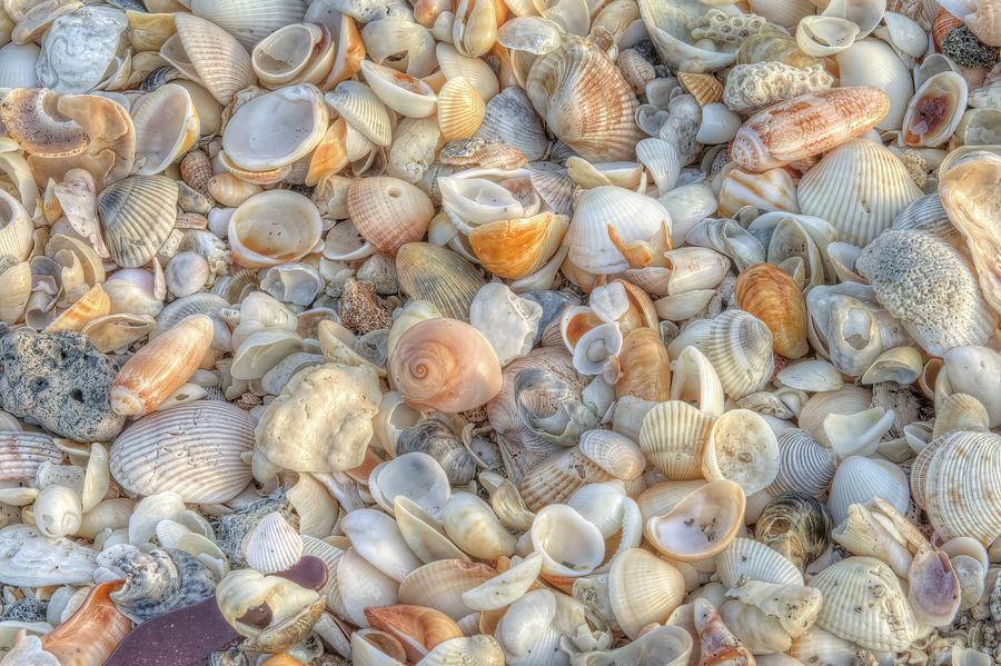 Seashells No 2 by Steve DaPonte