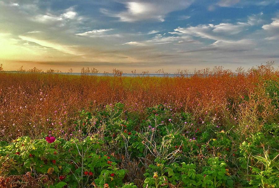Seaside Meadow by Linda Sannuti