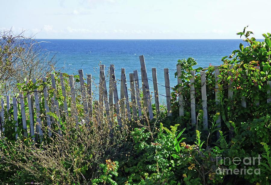 Seaside View 300 Painting