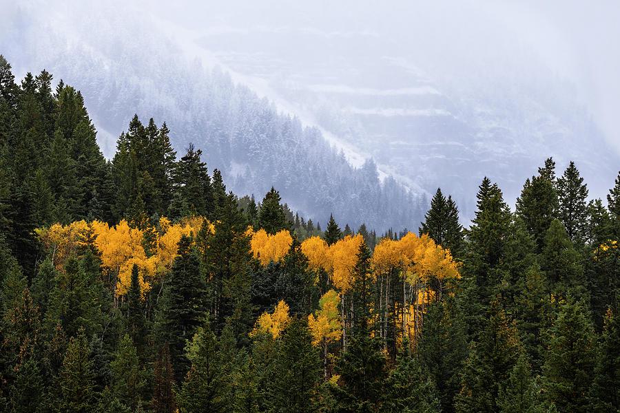 Seasonal Contrast by Michael Ash