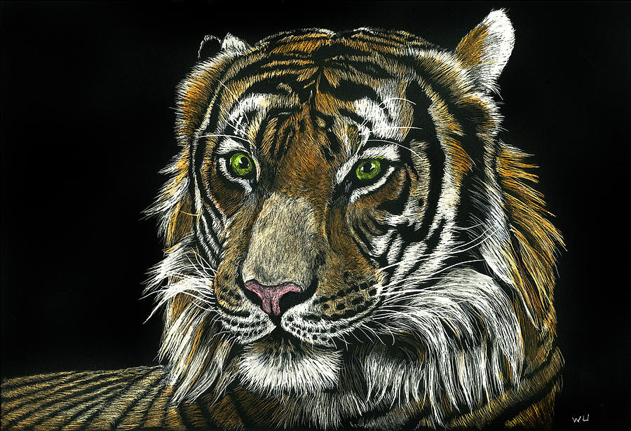 Seated Tiger by William Underwood