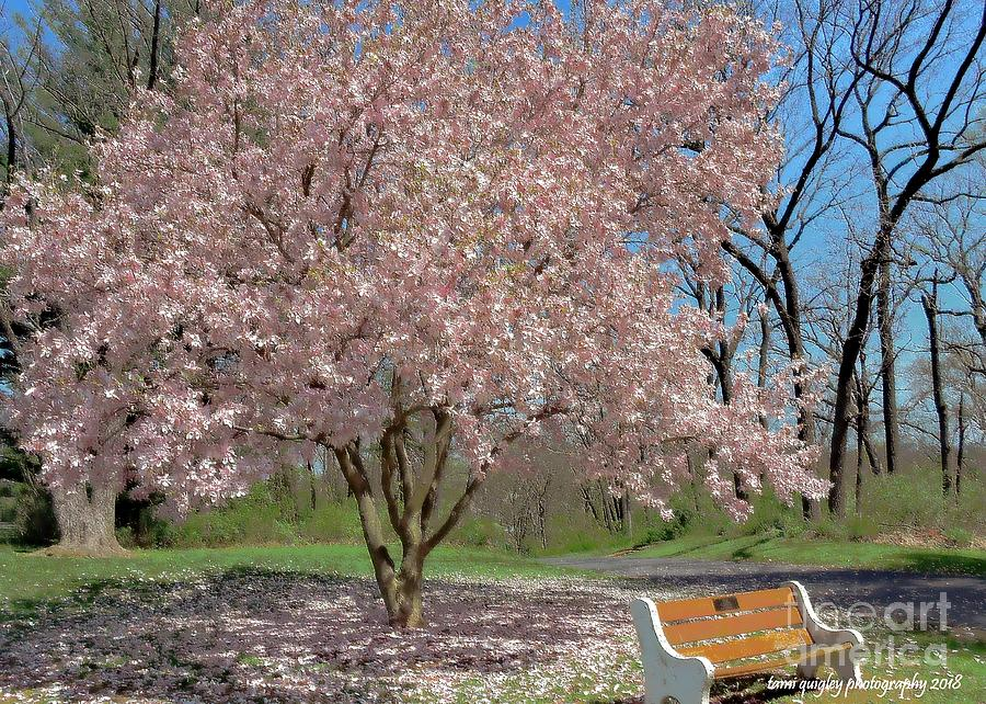 Seating By Magnolia Photograph By Tami Quigley