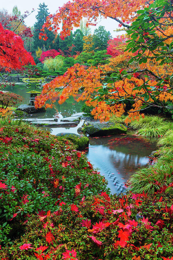 Seattle Japanese Garden in Peak Colors by Michael Lee