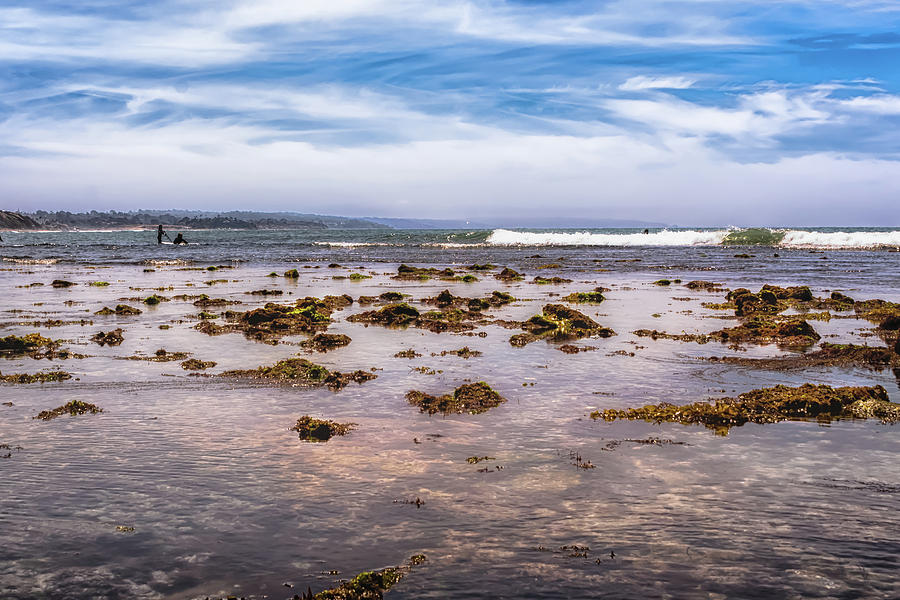 Seaweed at Low Tide by Alison Frank