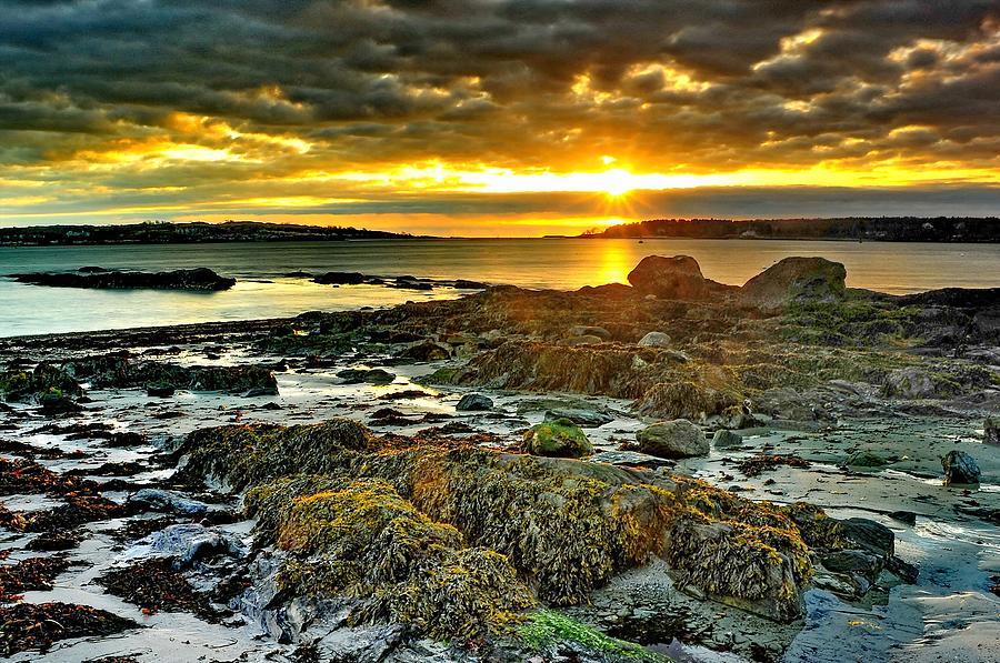Seaweed Sunrise Photograph by Frameworthyfotography By Thadd