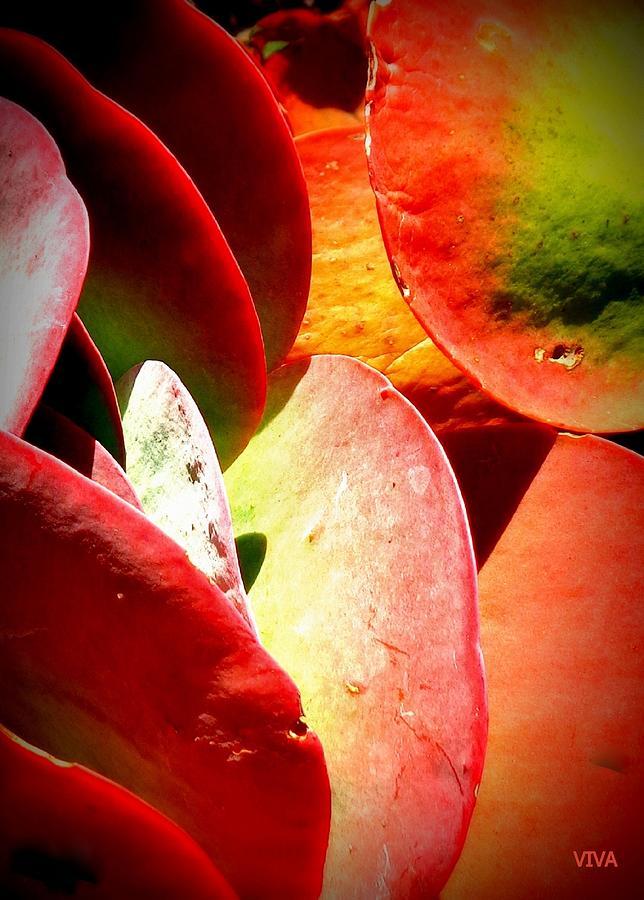 Secret  Life  Of  Plants by VIVA Anderson