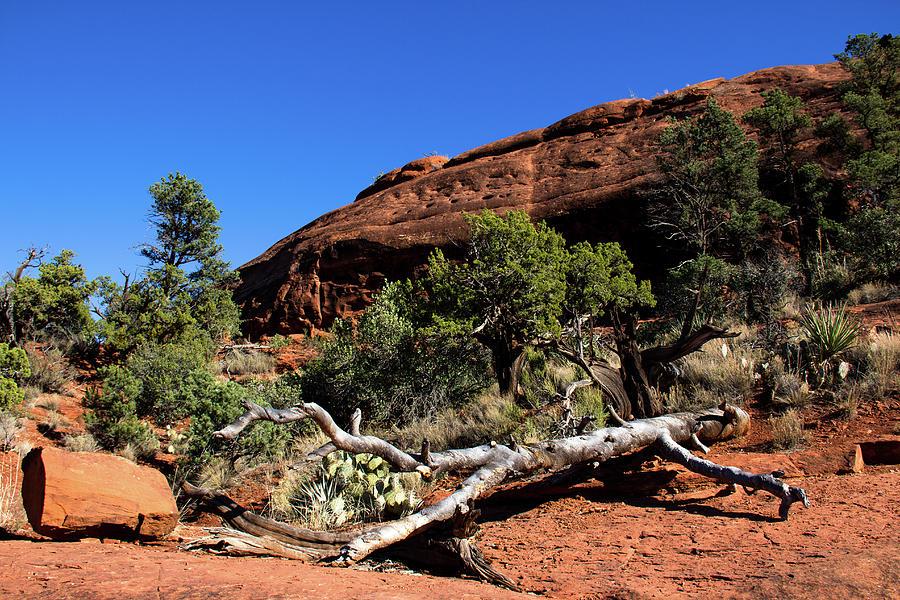 Sedona Red Rock Landscape  by Amy Sorvillo