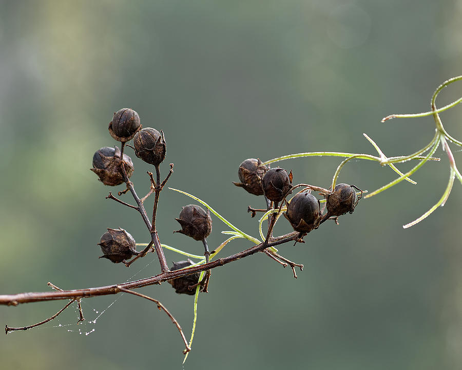 Seed Pods by Richard Rizzo