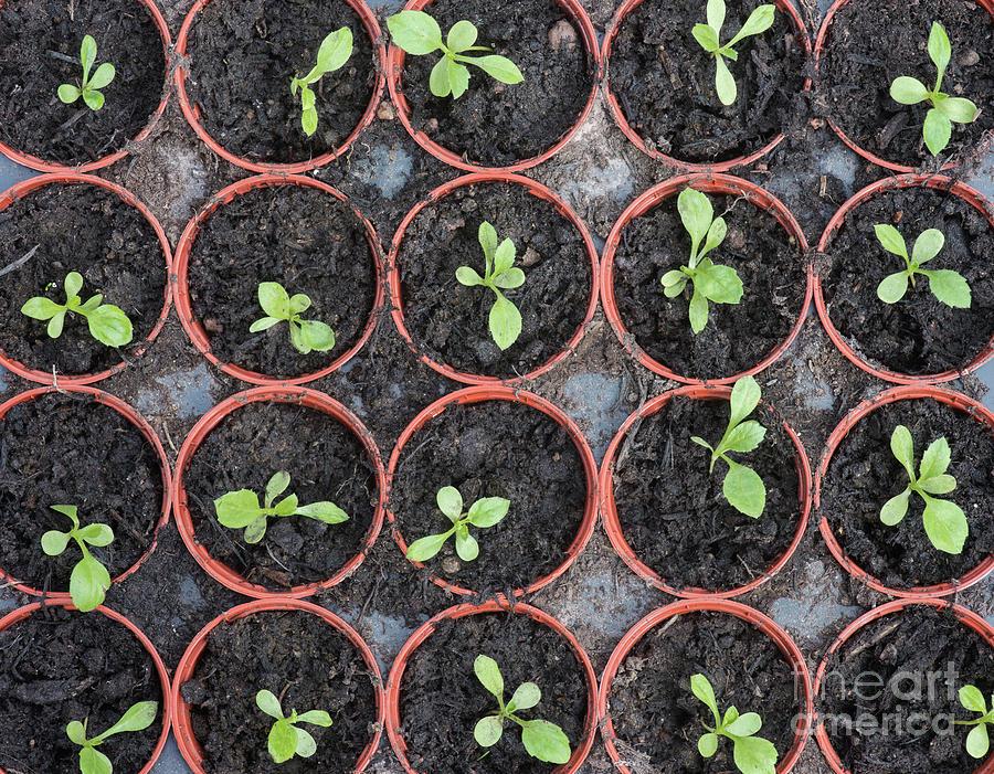 Seedlings by Tim Gainey