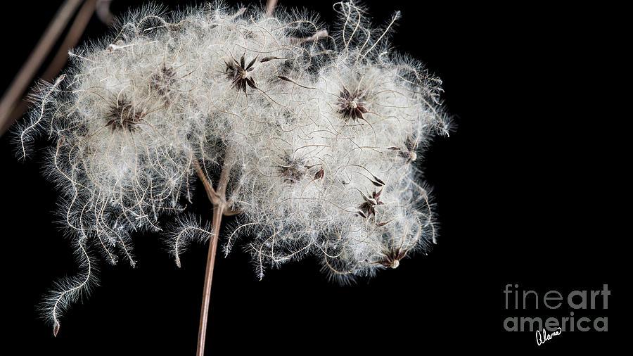 Seeds II by Alana Ranney