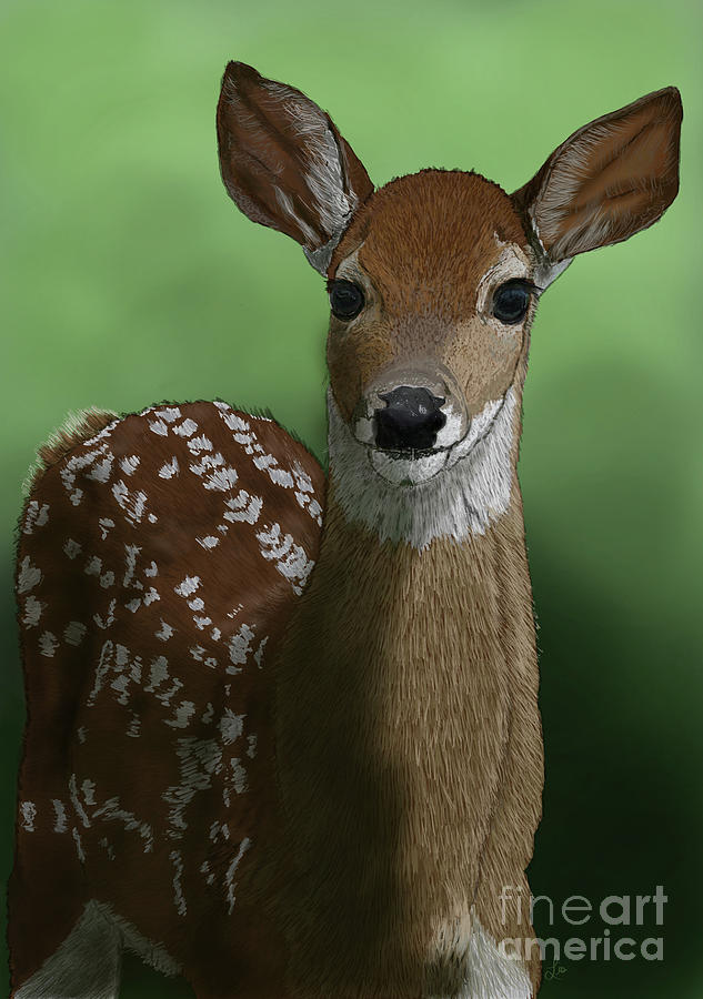 Seek the White-Tailed Deer Fawn by Ford Family
