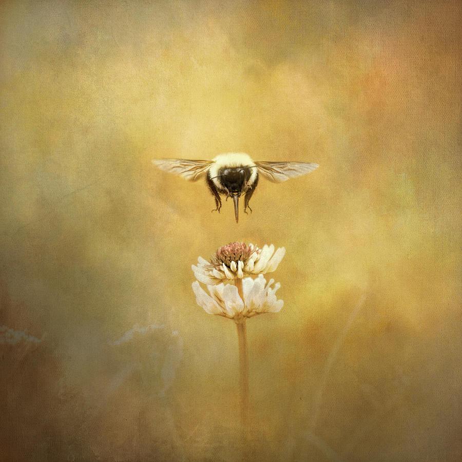 Seeking The Prize by Jai Johnson