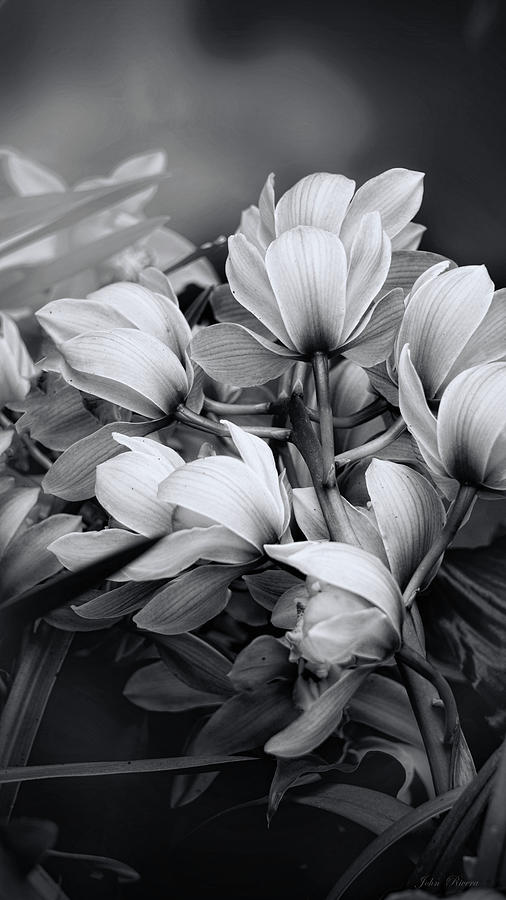 Send her Flowers by John Rivera