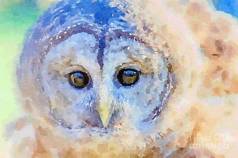 Send Me An Owl by Chris Scroggins