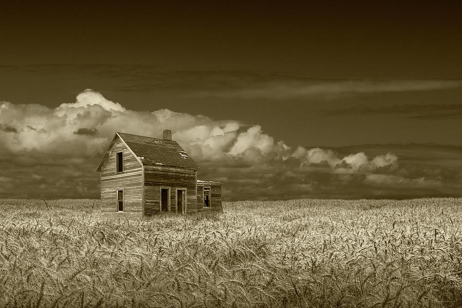 Sepia Tone of an Old Abandoned Prairie Farm House in a Wheat Fie by Randall Nyhof