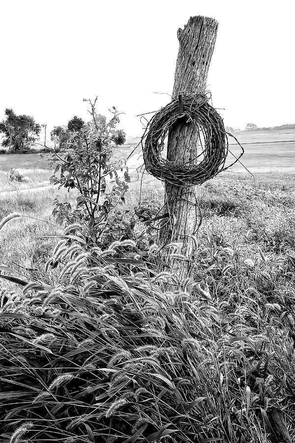 September Barbwire Writhe Bw Photograph