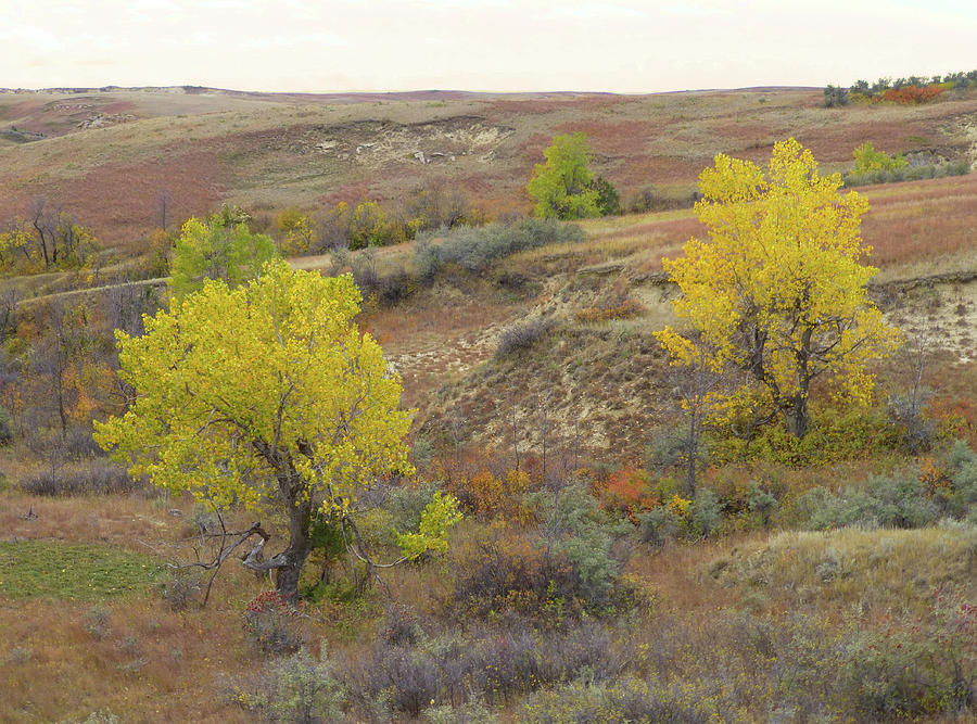 North Dakota Photograph - September Trees Reverie by Cris Fulton