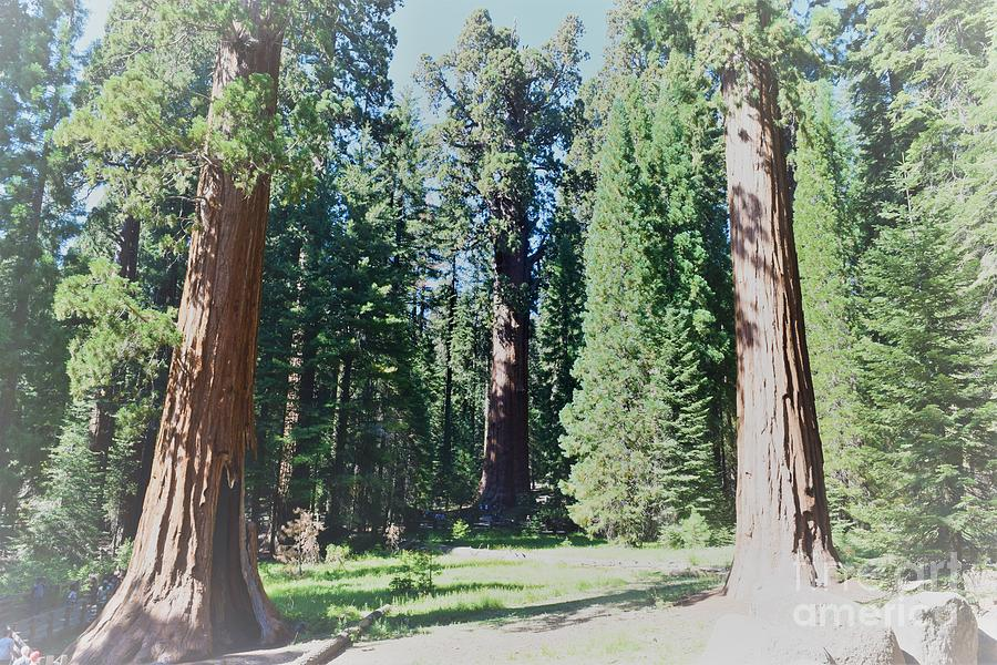 National Parks Photograph - Sequoia National Park by Leslie M Browning