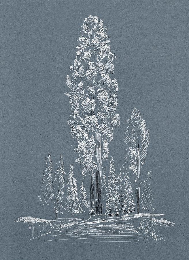 Sequoia. Winter. Blue by Masha Batkova