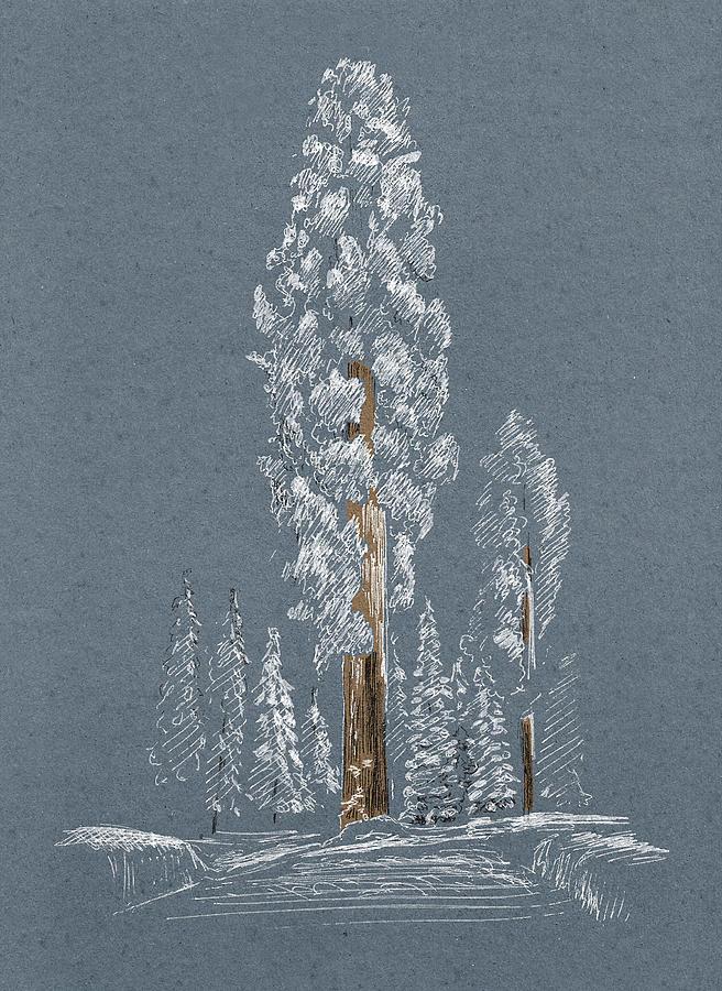 Sequoia. Winter by Masha Batkova