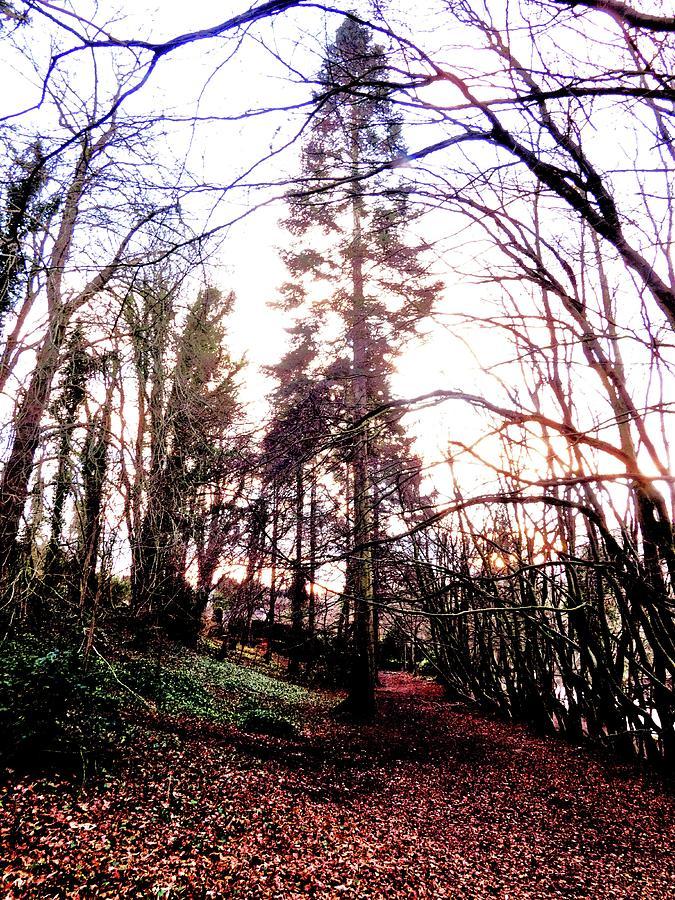 Handheld Photograph - Sequoias In Scotland by Nik Watt
