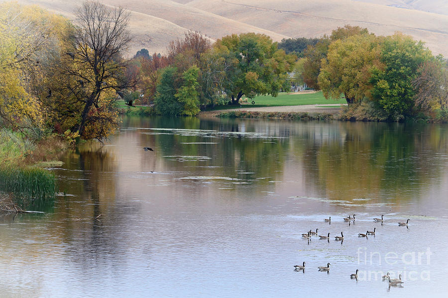 Serene Autumn Waterscape with Geese by Carol Groenen