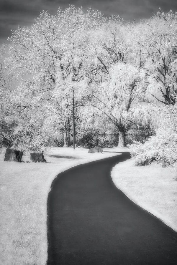Serene Path BW by Susan Candelario