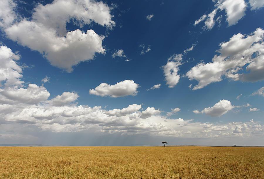 Serengeti Plains, Masai Mara National Photograph by William Manning